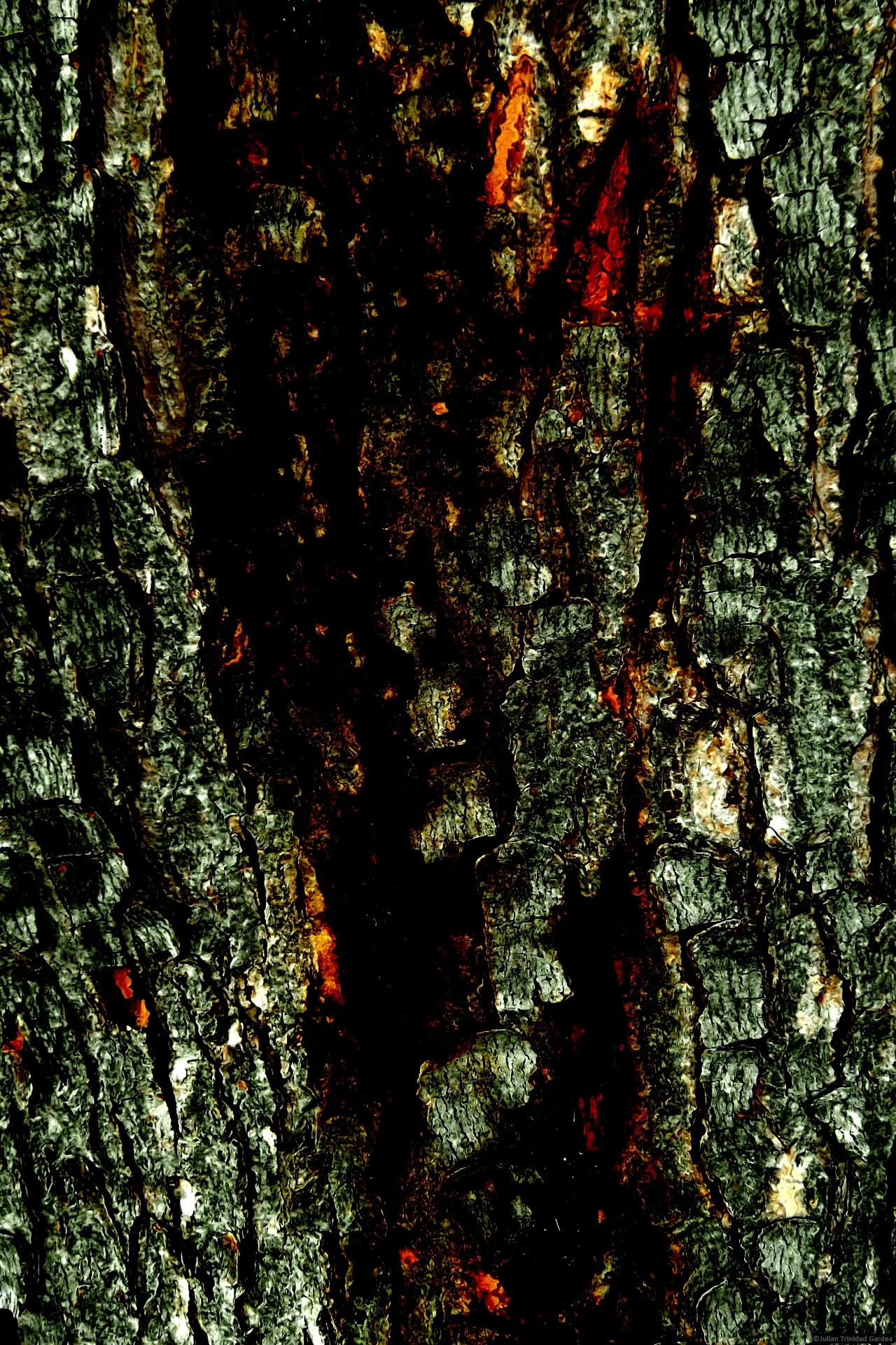 RED  RIVER  BARK