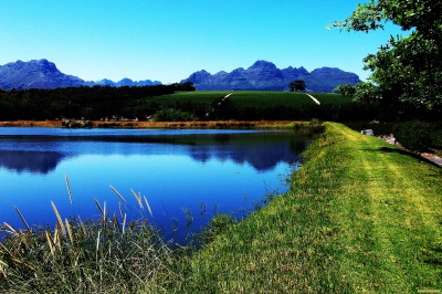 THE  VINEYARDS  OF  STELLENBOSCH